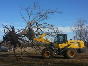 Armstrong Dirt Work, LLC of Wichita, KS has years of experience with Tree Removal